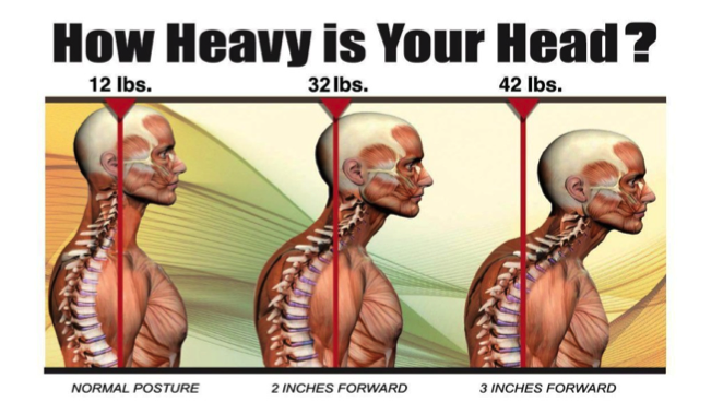 How Much Does A Human Head Weigh?