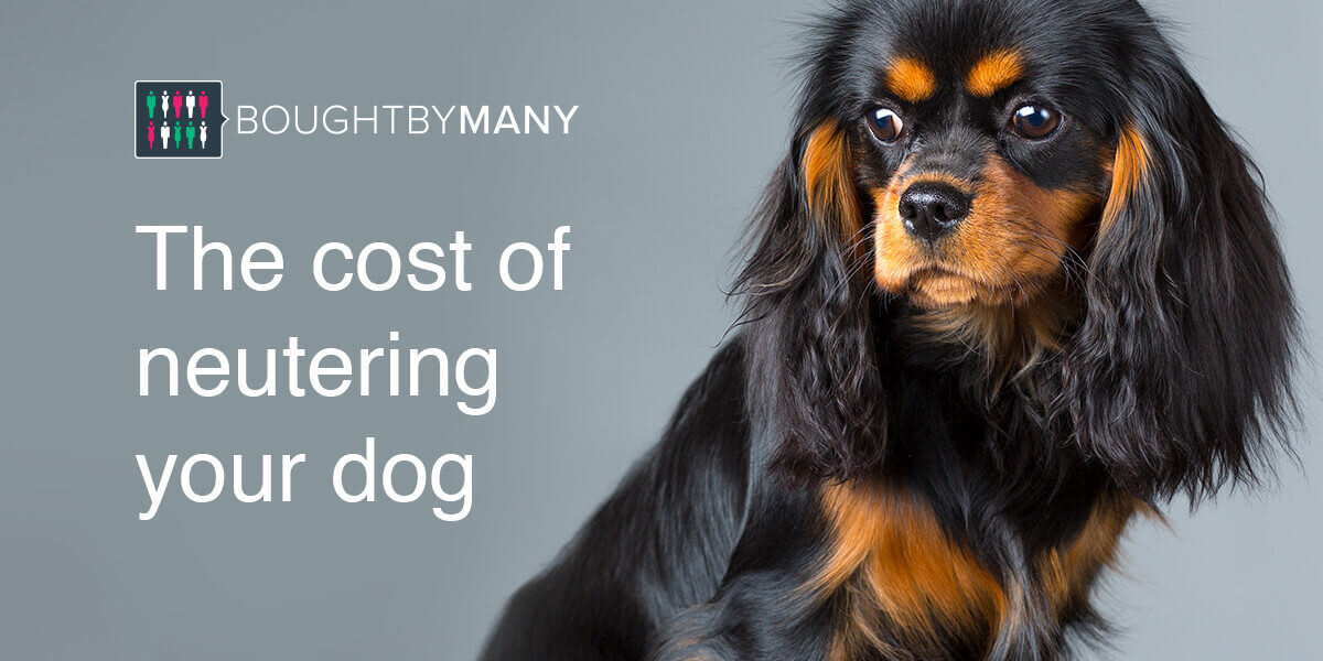 How Much Does It Cost to Neuter A Dog?